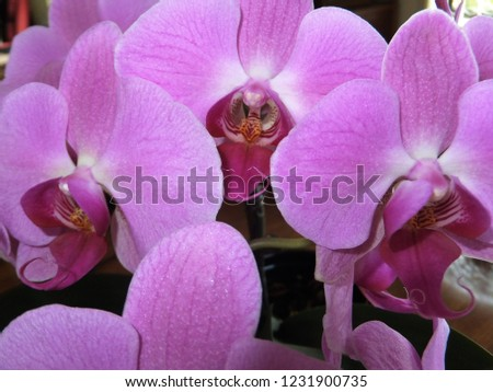 floral pink orchids #1231900735