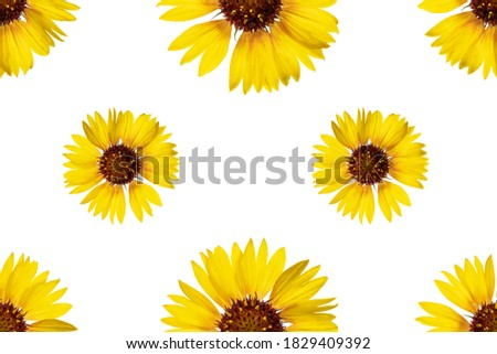 Floral seamless pattern from rudbeckia flowers. White isolated background. Close-up. Macro shooting. Concept for printing and design