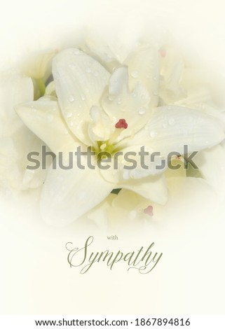 Floral sympathy greeting card. Cream colored lily with condolence message. Vertical orientation. Elegant sympathy background. Foto stock ©