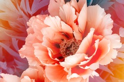 Floral wallpaper with Beautiful gentle pink peony flower growing in the summer garden. Close Up mountain tree peony.