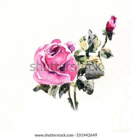 "floral watercolor illustration Album ""Roses watercolor"";"" flower watercolor"""