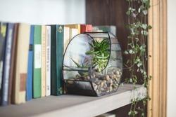florarium with plants succulents stands on a bookshelf