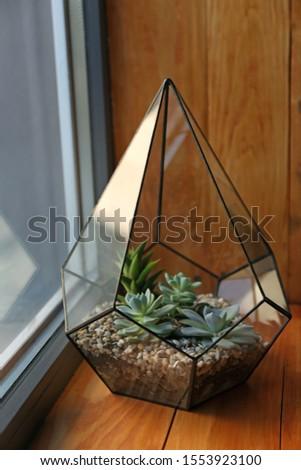 Florarium with succulents on wooden windowsill indoor