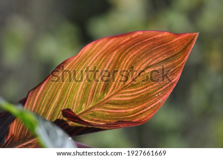 flores de color con el fondo desenfocado textura para fondos Foto stock ©