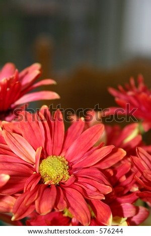Flores Del Otoño - stock photo