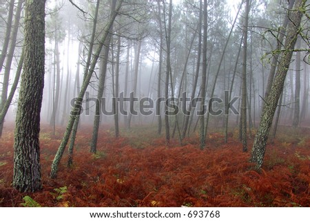 Florest in the autumn - stock photo