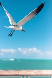 Florida Beach and Key west