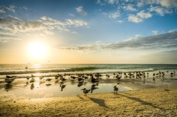 Florida beach sunset with a flock of birds enjoying the warm light and gentle surf of the tide.