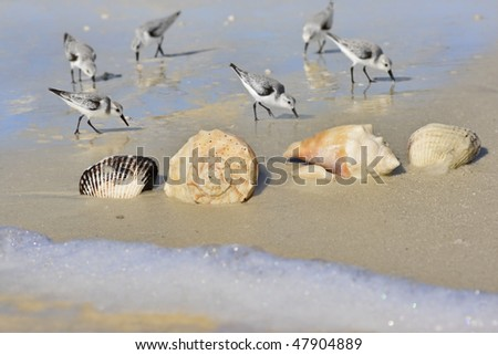 stock-photo-florida-beaches-focus-on-shells-47904889.jpg