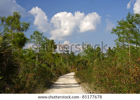 Florida, Trail, Big Cypress National Preserve, Florida Everglades