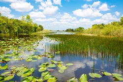 Florida wetland, Air boat ride at Everglades National Park in USA. Popular place for tourists, wild nature and animals.