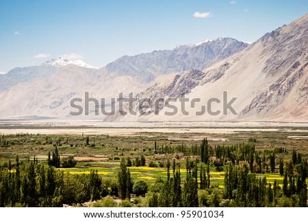 Flourishing high altitude valley in Ladakh