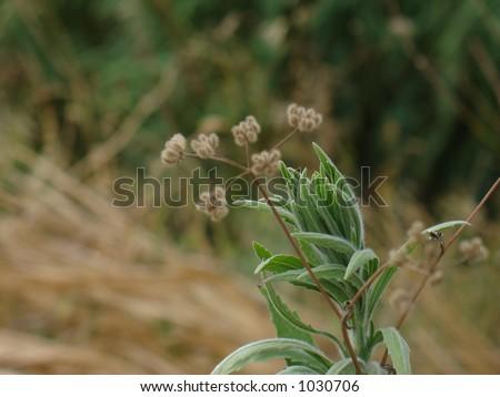 flower Foto stock ©