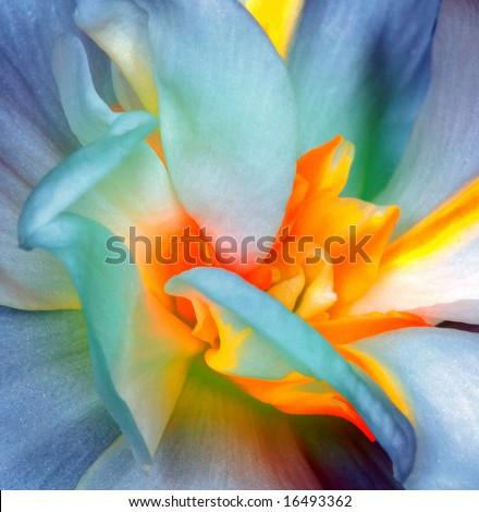 Flower #16493362