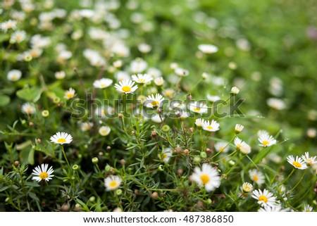 flower #487386850