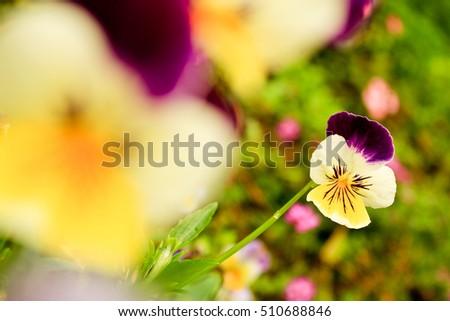 flower #510688846