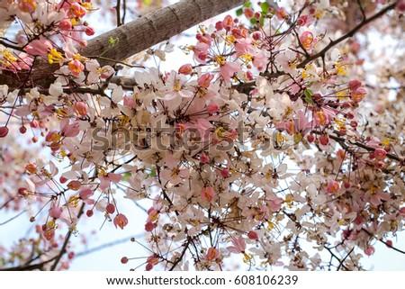 Flower #608106239