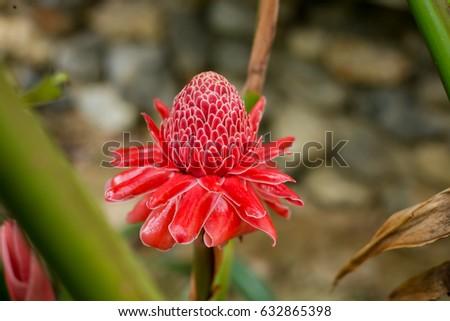 Flower #632865398