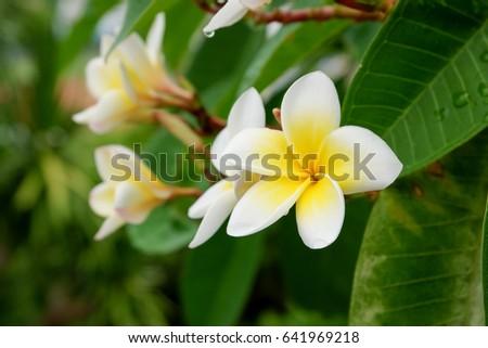 Flower #641969218