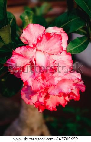 Flower #643709659