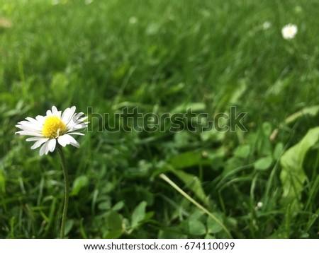 Flower  #674110099
