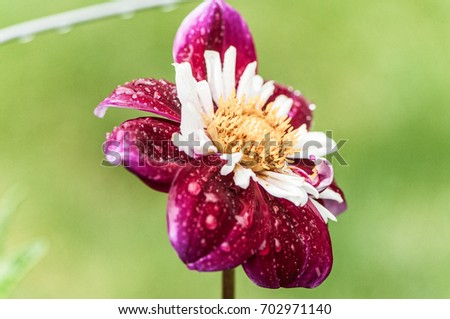 Flower #702971140
