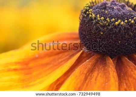 Flower #732949498