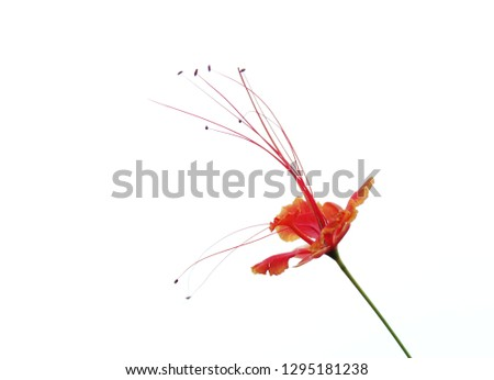 flower about stamens flying #1295181238