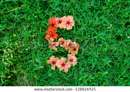 Flower Alphabet: Number 5. Number made of flowers on green grass background