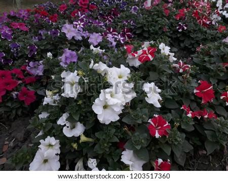 Flower Altogether In Wild