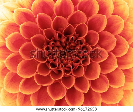flower and beautiful petals