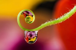 flower and dew drops
