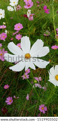 flower and flower and flower