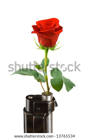 Flower and gun isolated on white background