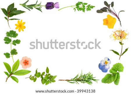 Flower and herb leaf border, over white background.