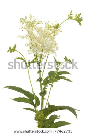 flower and leaf of herb on white background
