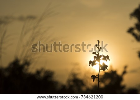 Flower and mini plant, in the morning time, Khao Yai National Park, Thailand #734621200