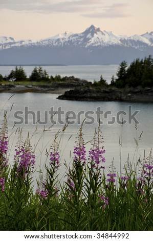 flower and mountain along sea