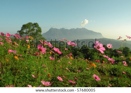 Flower and mountain in ChiangMai Thailand