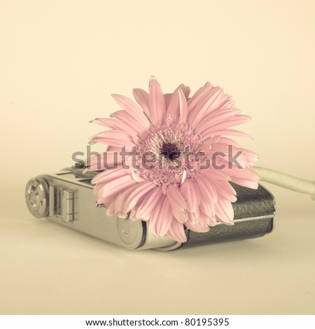 Flower and old camera