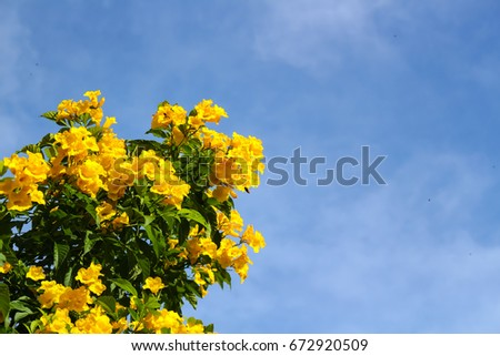 Flower and sky #672920509