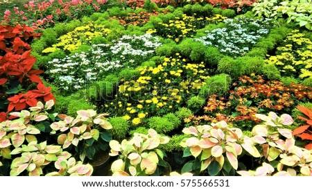 Flower arrangement from flower show