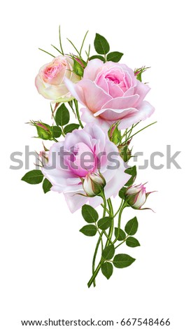 Flower arrangement of delicate pink roses, beautiful flower on a long curved stem.  Isolated on white background.