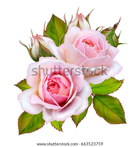 Flower arrangement of pink roses. Isolated on white background.