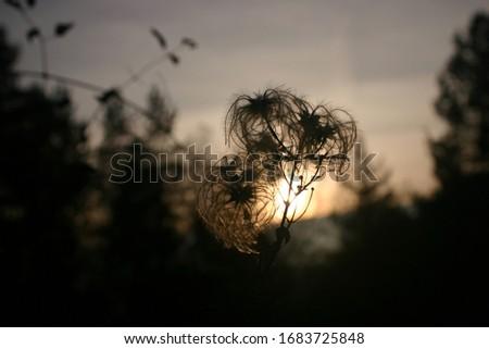 flower autumn black nostalgy sad Photo stock ©