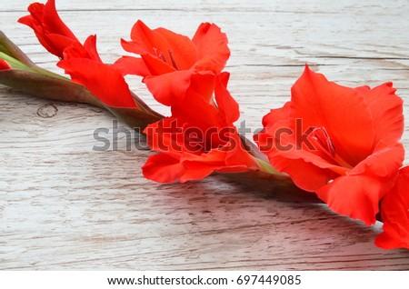 Flower Background #697449085