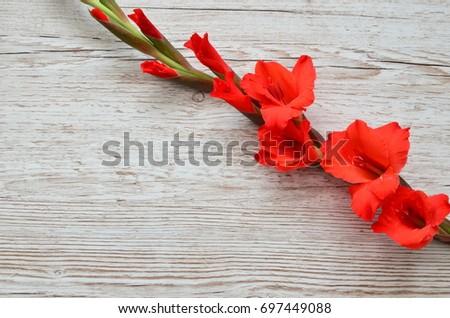 Flower Background #697449088