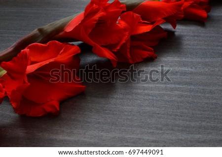 Flower Background #697449091
