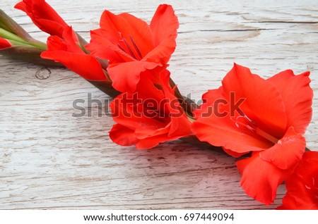 Flower Background #697449094