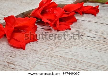 Flower Background #697449097